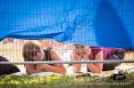Fotky z festivalu Hrady CZ na Bouzově - fotografie 115
