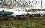 První fotky z Pohoda festivalu - fotografie 14