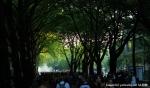 Druhé fotky z Loveparade - fotografie 105