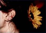 Čtvrté fotky ze Summer of Love - fotografie 103